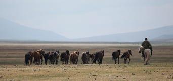 Mongolische Herde und Reiter lizenzfreies stockfoto