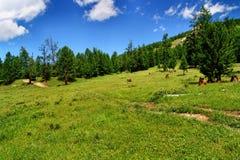 Mongolische Landschaft Stockfoto