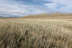 Mongolisches Gras stockbilder