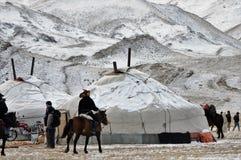 Mongolisches Pferd in den Bergen während des Steinadlerfestivals Stockfotos
