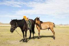 Mongolisches Pferd mit Sattel Stockfoto