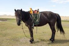 Mongolisk häst med sadeln Arkivfoton