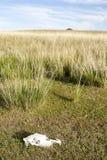 Mongoliska grässlättar och hästskalle Royaltyfria Bilder