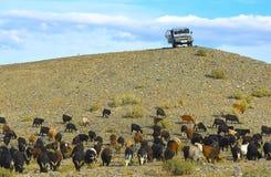 Mongoliska herdar på SUV Arkivfoto