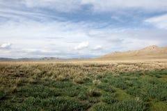 Mongolscy Obszar trawiasty Obraz Royalty Free