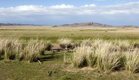 Mongolscy obszary trawiaści Zdjęcia Royalty Free