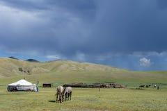 Mongoolse yurt en paarden stock foto's