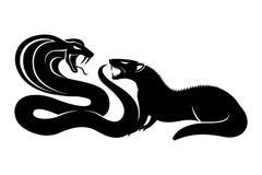 Free Mongoose And Cobra. Royalty Free Stock Photo - 84665415
