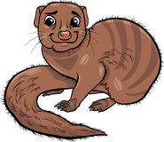 Mongoose animal cartoon illustration Stock Photography
