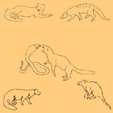 Mongoose. Sketch by hand. Pencil drawing by hand. Vector image. The image is thin lines. Vintage Stock Image