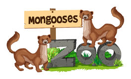 Mongooses standing on zoo sign Stock Photography