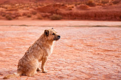 Mongrel. Stray dog in Monument Valley Tribal Park, Arizona Stock Photo