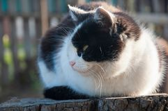 Mongrel cat sitting on tree stump in summer. Mongrel black and white cat sitting on tree stump, looking away outdoors in summer Stock Photo