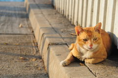 Mongrel cat. Golden mongrel mixture cat at street royalty free stock photography