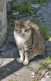 Mongrel cat. In natural background Stock Images