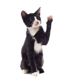 Mongrel cat. With a raised paw on white background isolated Royalty Free Stock Photos