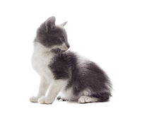 Mongrel cat. On a white background isolated Stock Photo