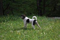Mongrel dog Stock Photos