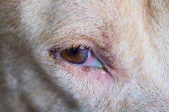 Mongrel dog dog close u. P of the eyes Royalty Free Stock Photography