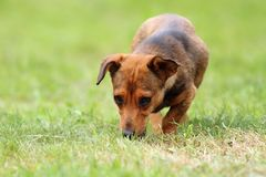 Mongrel dog in the field Royalty Free Stock Photos