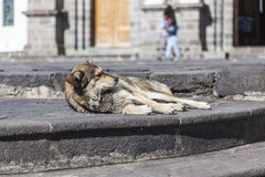 Mongrel dog lying on steps of park Royalty Free Stock Photo