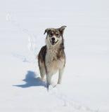 Mongrel dog outdoor Stock Photos