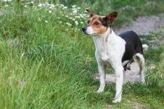 Mongrel dog outdoors Royalty Free Stock Photo