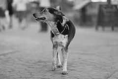 mongrel dog outside Stock Images