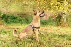 Mongrel dog, pet mammal on grass, nature. Friend Stock Image