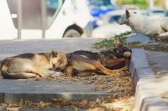 Mongrel dogs on the streets of the city. Animal protection concept. stock photos