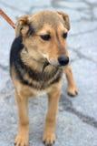 Mongrel puppy outdoors Royalty Free Stock Photos