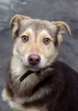 Mongrel puppy. Portrait of a cute mutts on the street Royalty Free Stock Photos