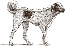 Mongrel Stock Images