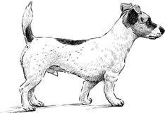 Mongrel vector illustration