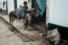 mule is being packed by his rider to be ready to go up the mountain royalty free stock photography
