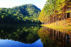 Moning no lago Pungência-Ung, norte de Tailândia Fotos de Stock