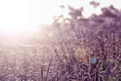 Moning sunrise  with grass flower ,abstract spring ,summer backg Royalty Free Stock Images