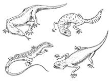 Moniteur de dragon de Komodo, lézard de sable américain, reptiles exotiques ou serpents, gecko à queue adipeuse repéré animaux sa Photographie stock libre de droits