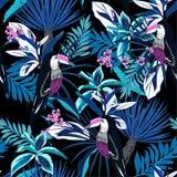 Monitone μπλε τροπικό δασικό ζωηρόχρωμο Toucan, εξωτικά πουλιά, τ Στοκ Εικόνες