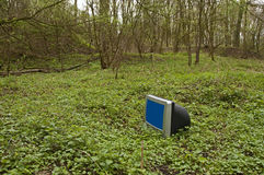 Monitor with blue screen in a forest Stock Photography