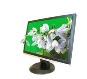 Monitor and bunch of flowers Royalty Free Stock Photo
