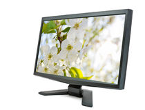 Monitor and cherry flowers. Royalty Free Stock Photography