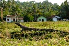 Monitor dell'attività dell'acqua asiatico selvaggio dello Sri Lanka fotografia stock libera da diritti