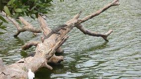 Monitor dell'attività dell'acqua Immagini Stock Libere da Diritti