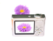 Monitor digital camera. With the image of a flower. An isolated object on a white background Royalty Free Stock Images