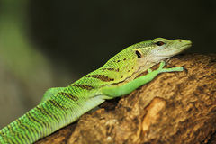 Monitor emerald Royalty Free Stock Images