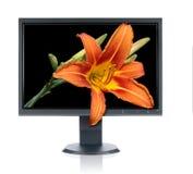 Monitor en lilie Royalty-vrije Stock Foto's
