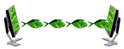 Monitor and fish Royalty Free Stock Image