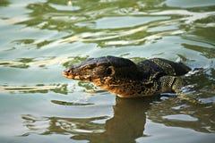 Monitor jaszczurka w Lumpini parku Obraz Royalty Free