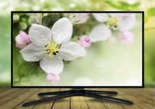 monitor 4k isolato su bianco Immagini Stock Libere da Diritti
